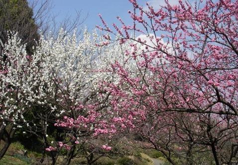 3月18日の厚生常任委員会意見発表
