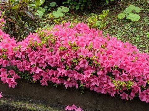 津久井やまゆり園の再生について質問 〈厚生常任委員会〉